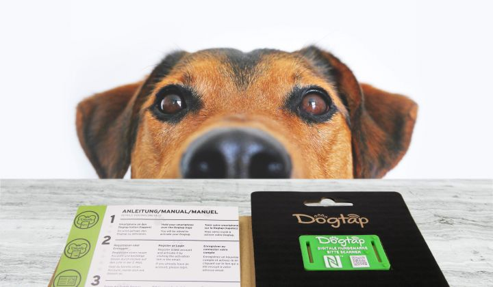 Dog sniffing a Dogtap