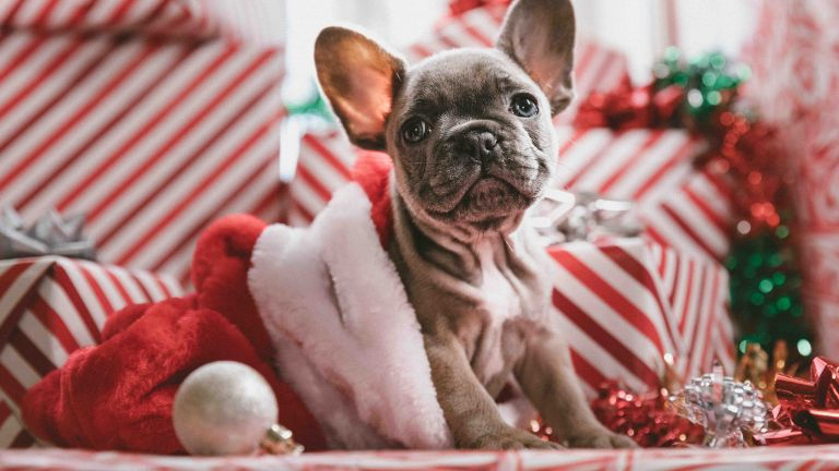 Christmas with your dog (Part 1) – Tips and what to keep in mind