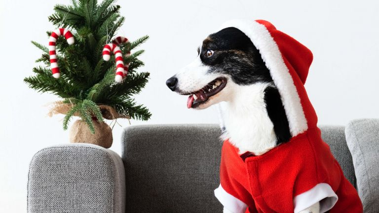 Christmas with your dog (Part 2) - Christmas treats, decorations and other dangers