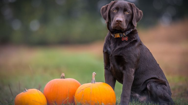 Halloween with your dog